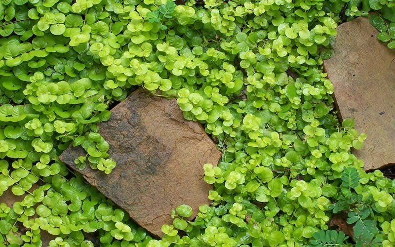 Nature S Way Mulch